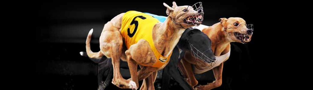 greyhounds-betting-strategy