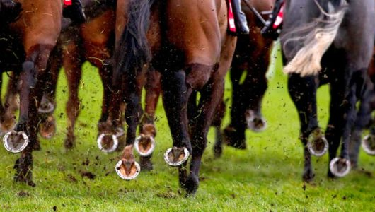 Punchestown Festival Trends