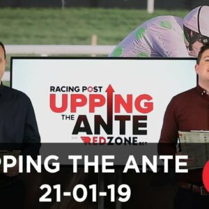 Upping The Ante Cheltenham Festival Preview Week Eight