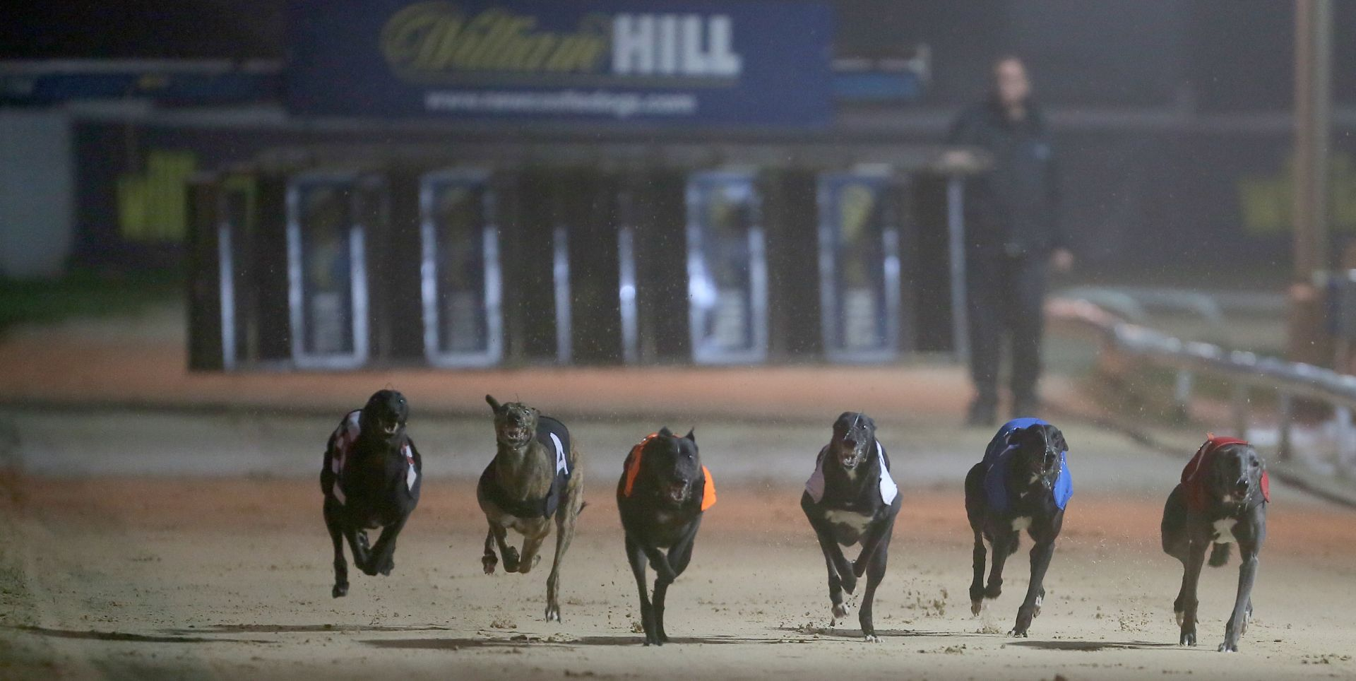 Greyhound Racing tips: Sussex Cup & Coral Regency preview
