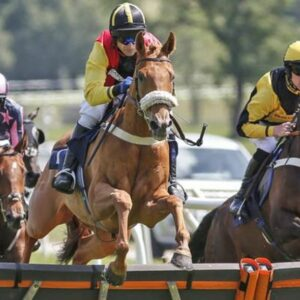 Horse racing tips TODAY: Horses you MUST back at Haydock, Newbury, Nottingham, Uttoxeter | Racing | Sport