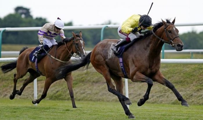 Market Movers Horse Racing Tips