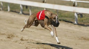 Greyhound Racing Tips from Doncaster on Wednesday 02092020